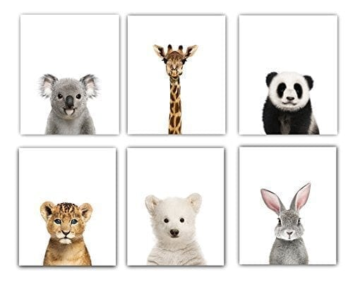 Baby Animals Nursery Wall Decor Room Animal Pictures 8x10 Cute Photography Prints Set Of 6